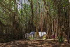 Banyan-14-Panorama