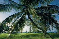 Golf-Palmier